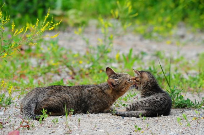 ※猫の癒し写真1