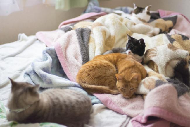 ※猫の癒し写真4