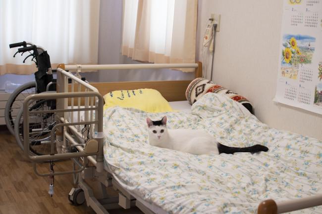 ※猫の癒し写真3